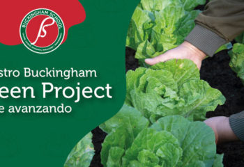 green-project-blog